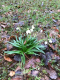pomladni pohod